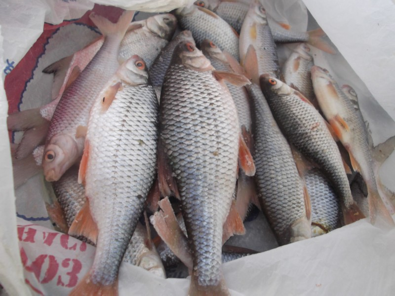 Свежая речная рыба купить в москве